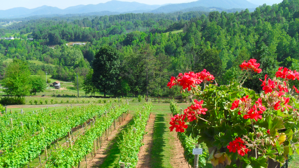 vineyard wedding asheville longleaf marshall mountains western nc north carolina wine