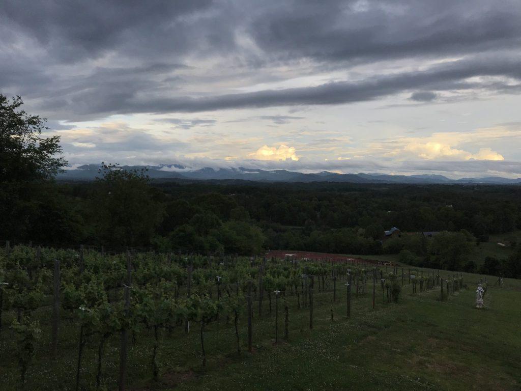 Longleaf vineyard 04